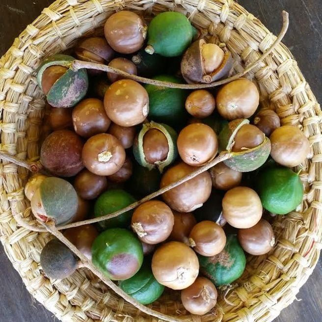 macadamsia-nuts